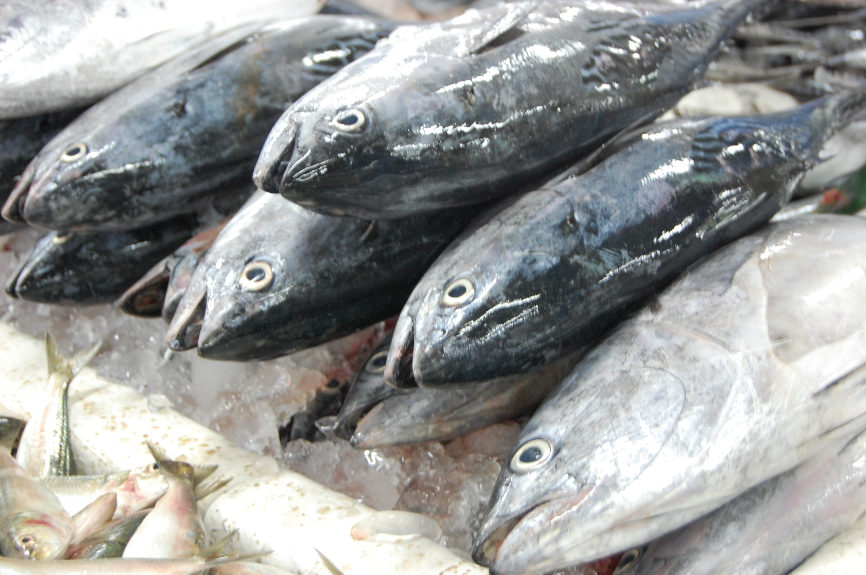 Tips and tales from the fish market part 2 world supper for Fresh fish market los angeles